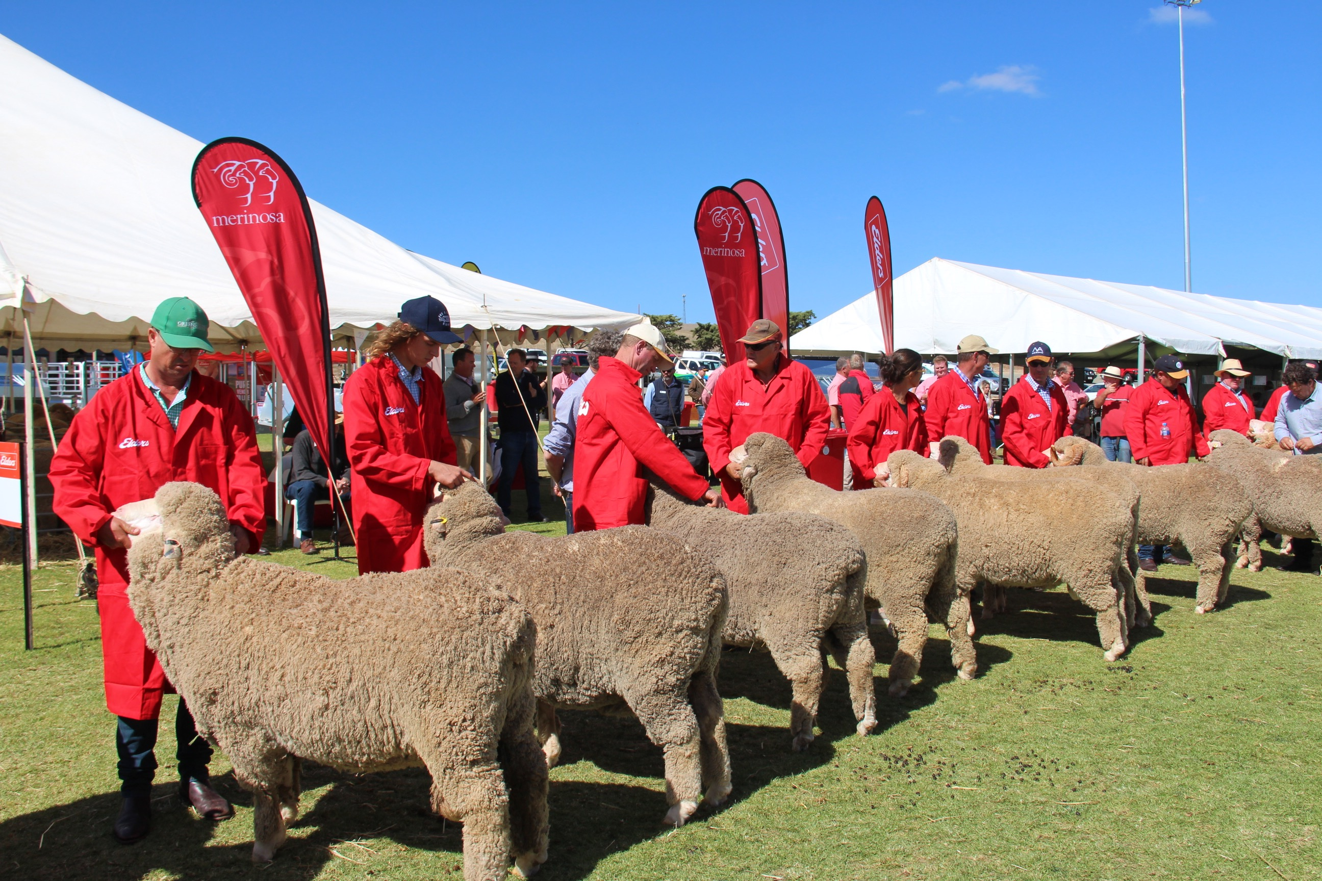 Gum Hill On Property at Burra Sheep Expo 2018