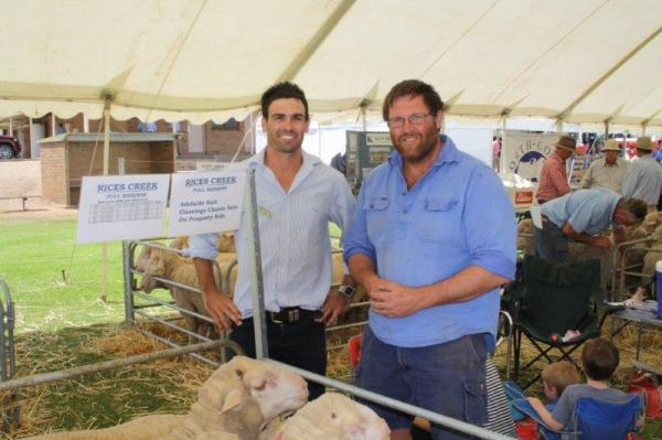 2015 SA Elders Stud Merino Expo